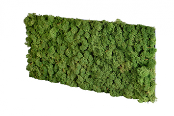 acoustic-moss-forest-green