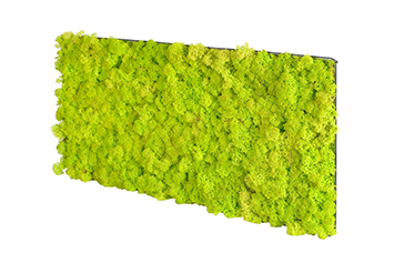 acoustic-moss-lime-green