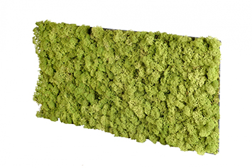 acoustic-moss-medium-green