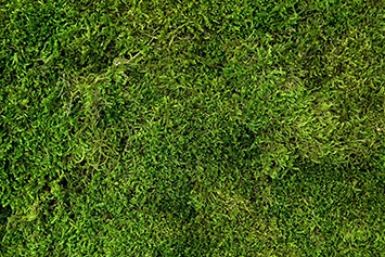 long-moss-deep-green