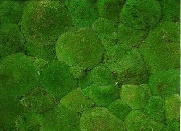 pole-moss-natural-green