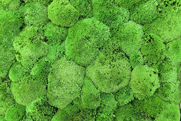 pole-moss-vivid-green